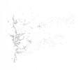 Drawing-Field-MW-2