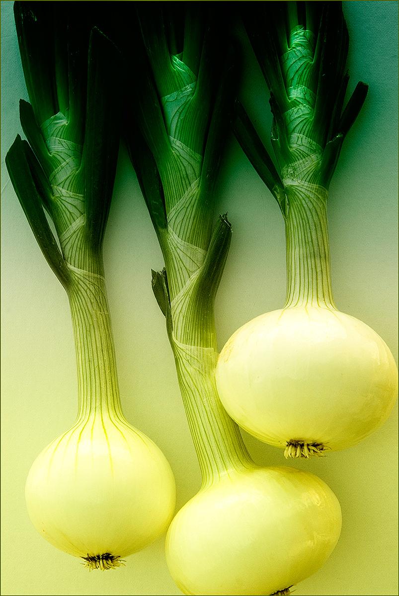 Onions-Carl Kravats Food Photography