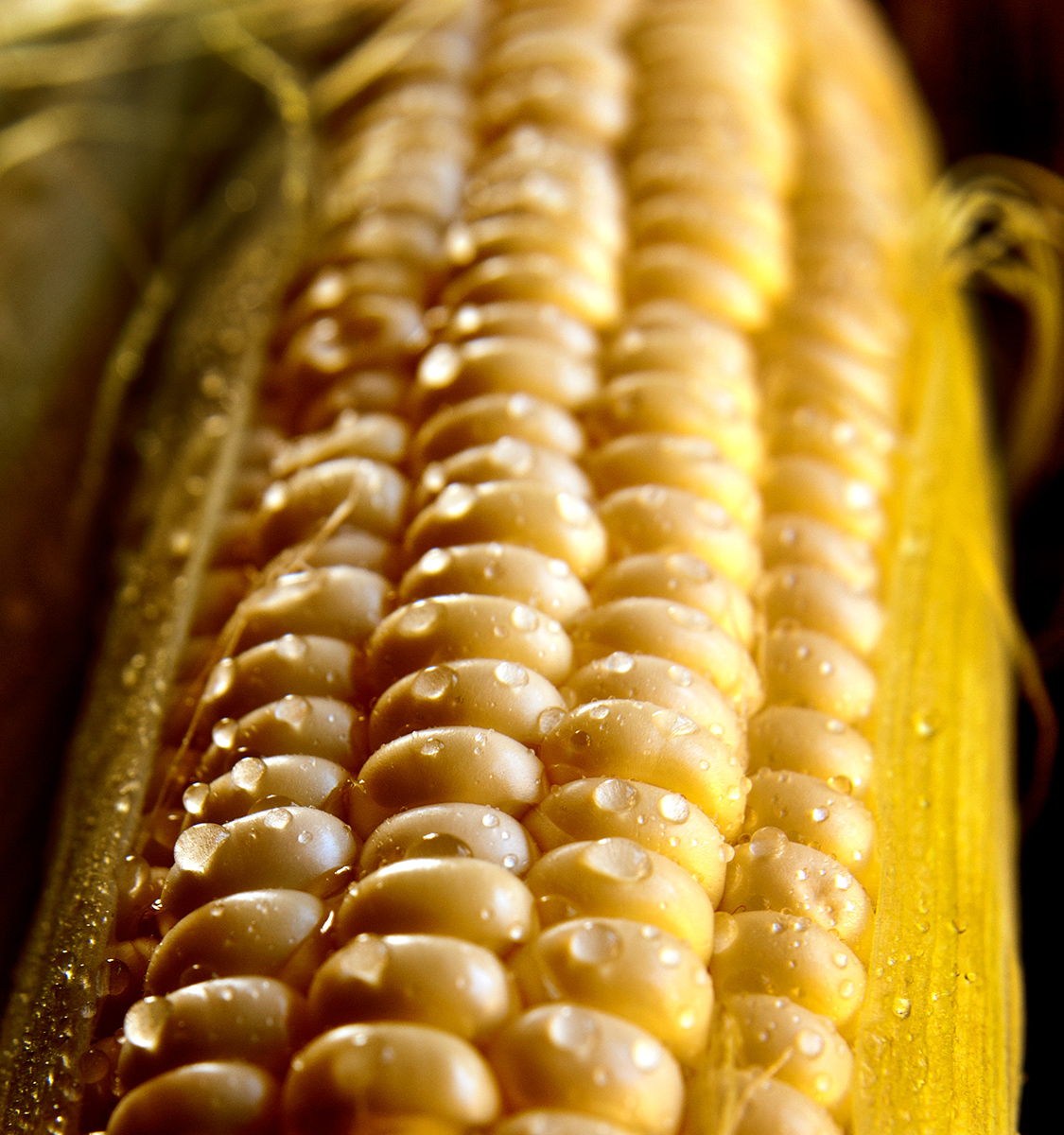 Corn-Carl Kravats Food Photography