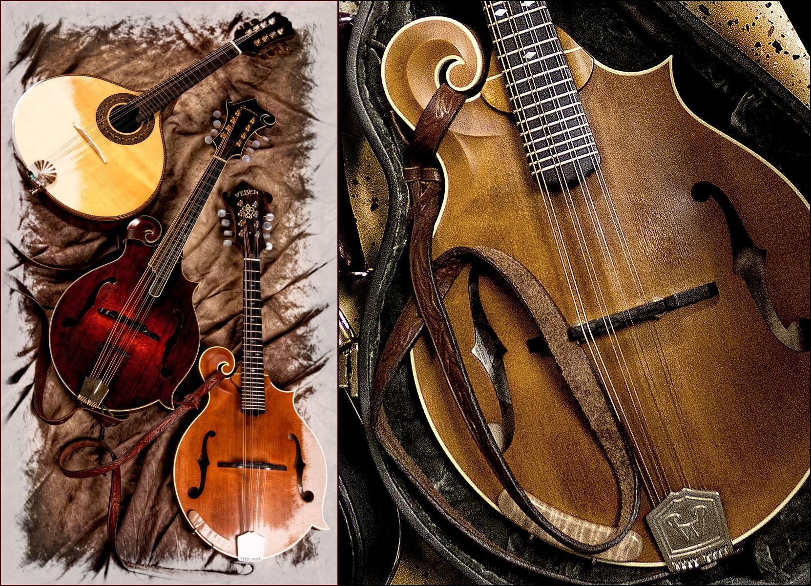 Tammys Mandolin-Musicman Photography