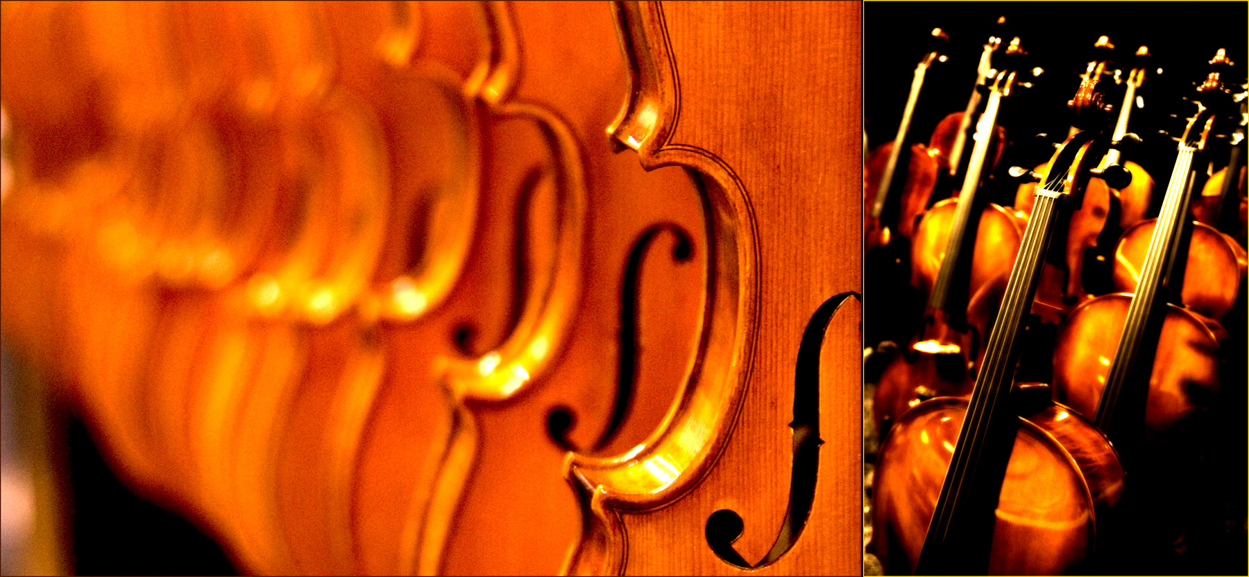 Violins and Basses-Musicman Photography