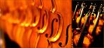 Violins and Basses-Musicman Photography
