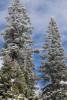 Lak-Tahoe-Landscape-06