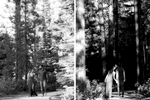 lake-tahoe-1-engagement-session-photography-tahoe-weddings