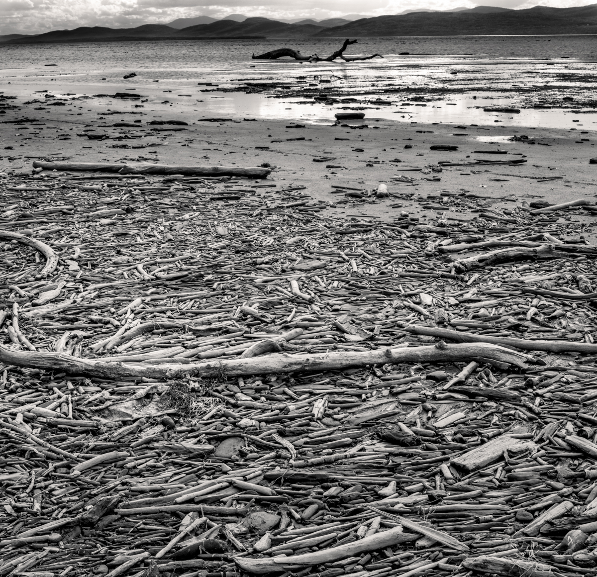 Driftwood-032382
