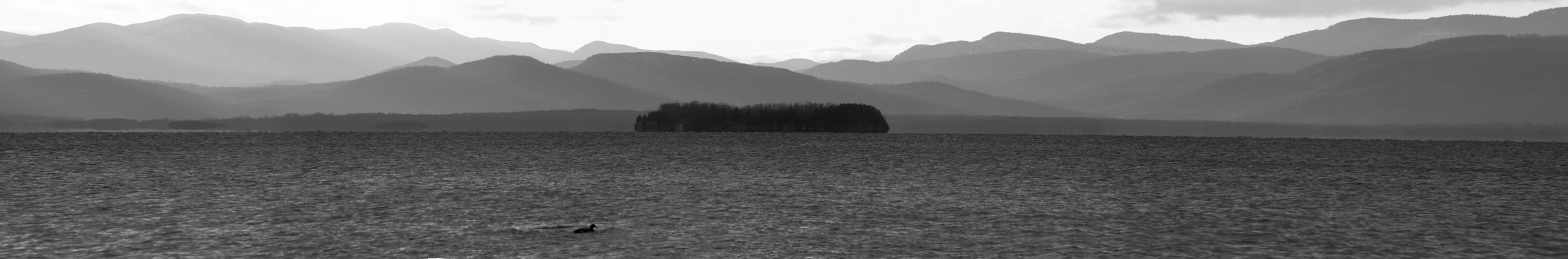 Juniper__and_Adirondack-