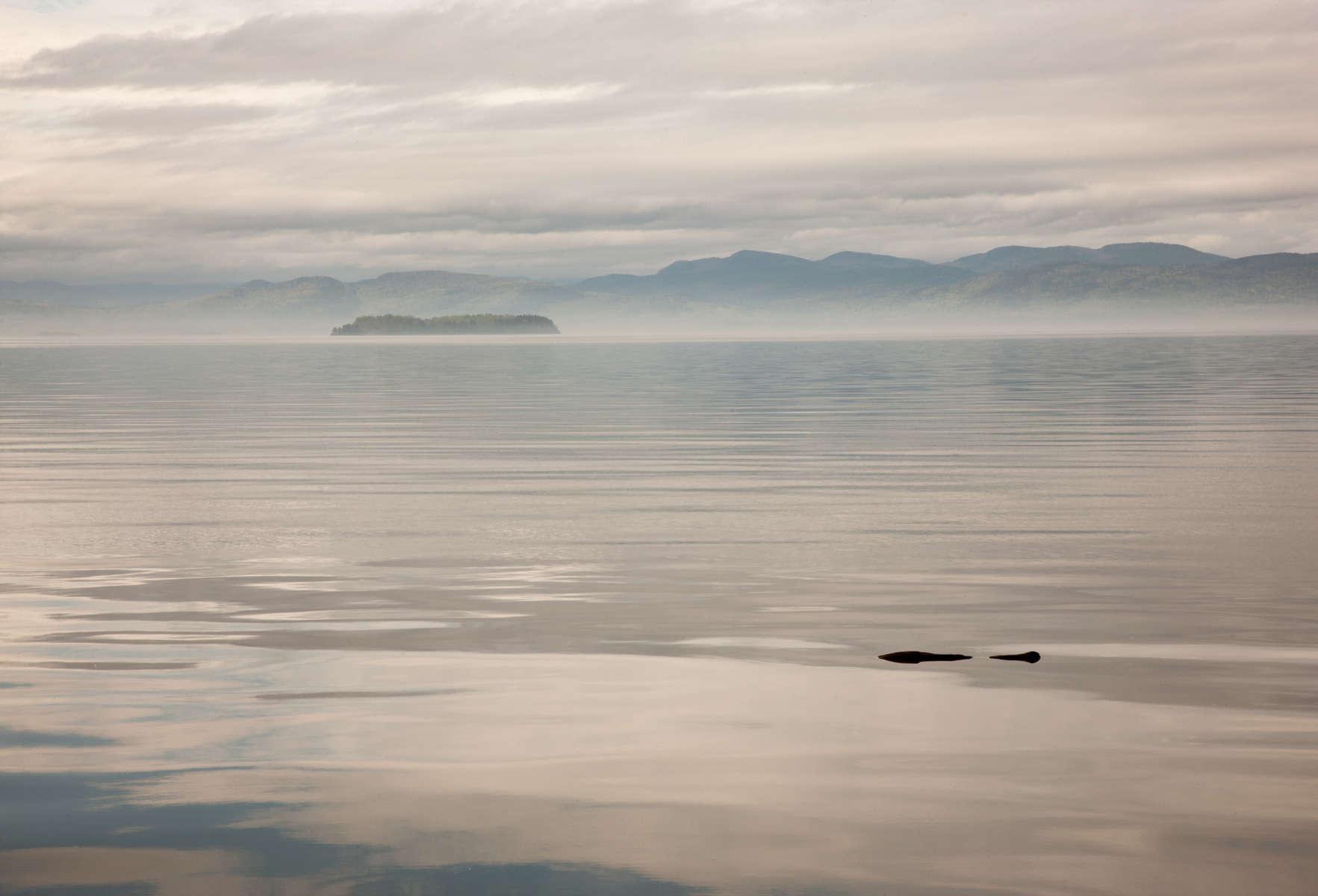 Log Afloat Juniper Island