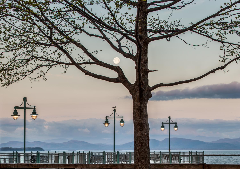 Spring Moon Light