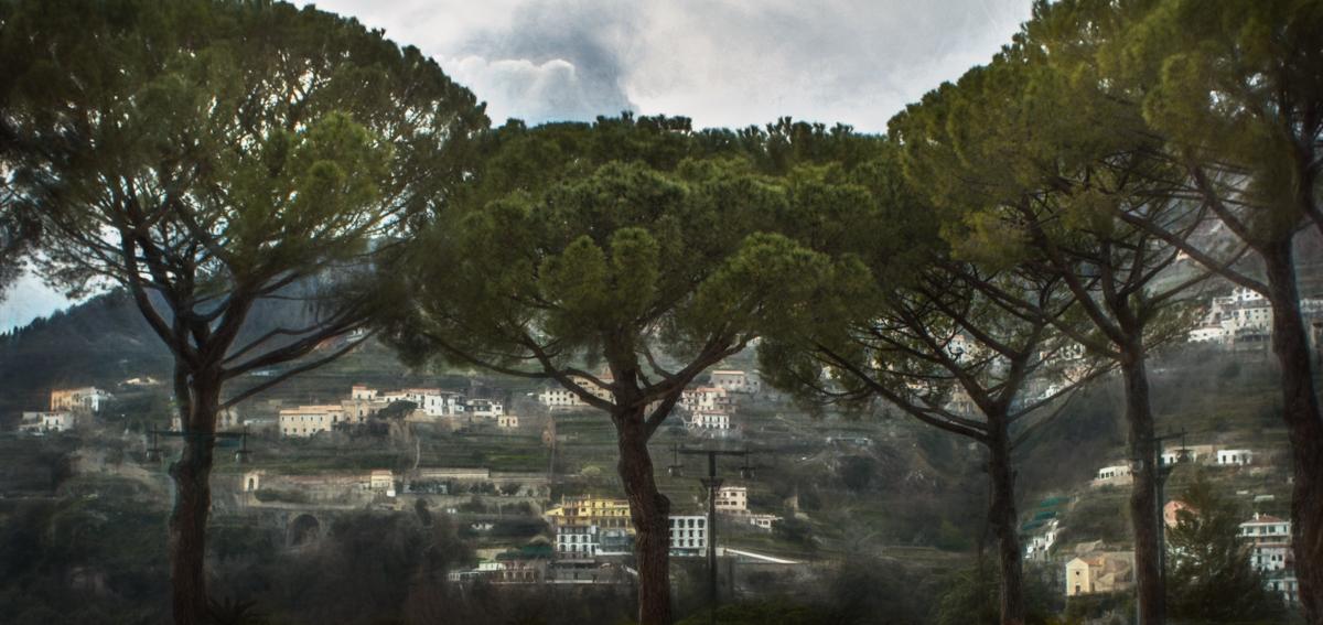 Umbrella_Pine_Trees-