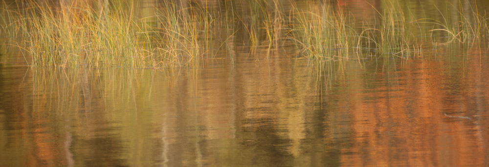 Shelburne Bay Reeds Reflection