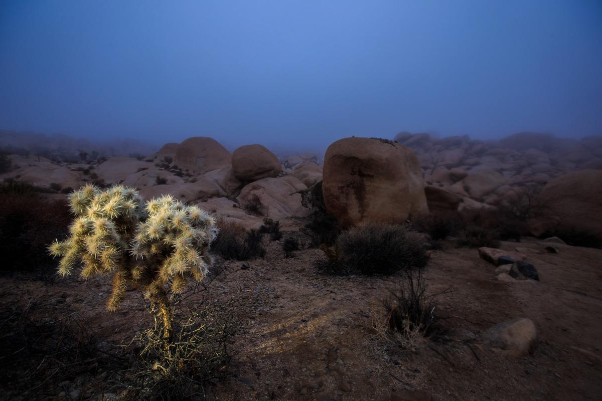 Landscape027