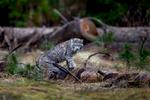 wildlife011