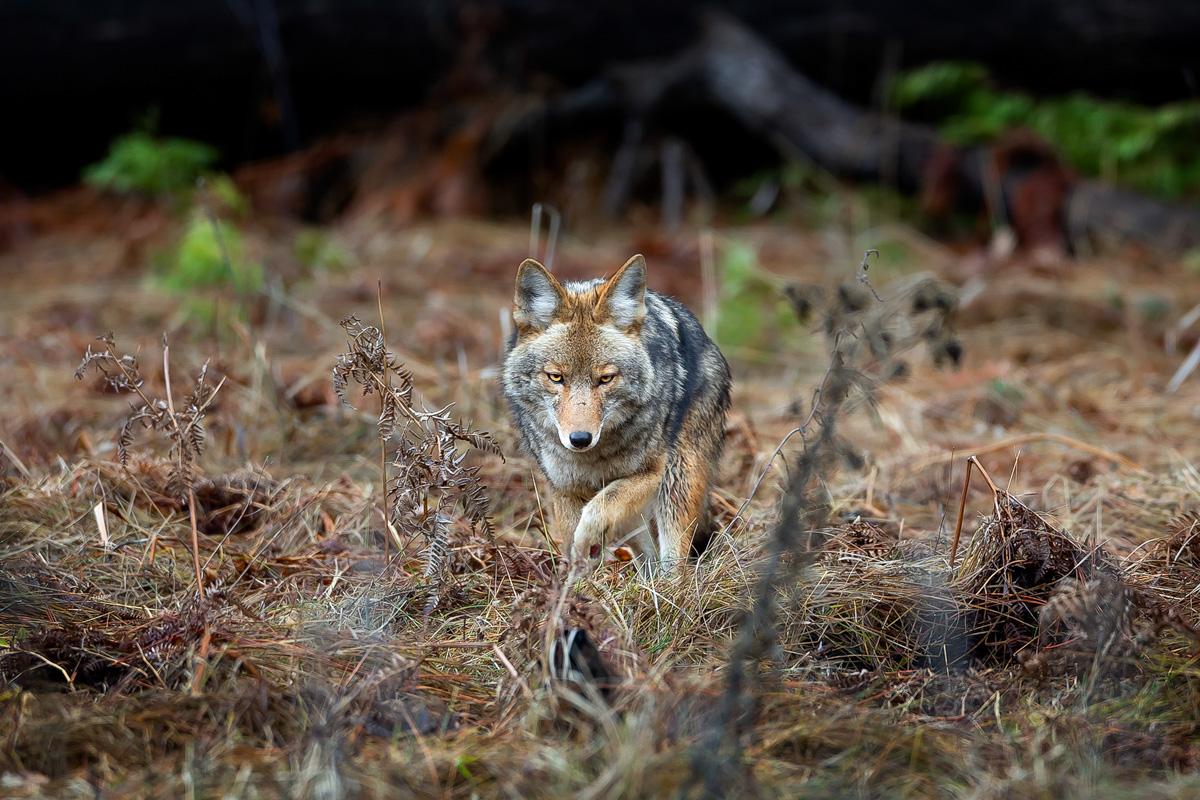 wildlife012