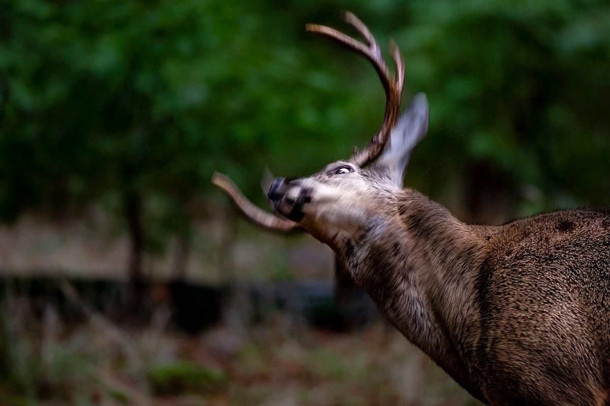 wildlife015