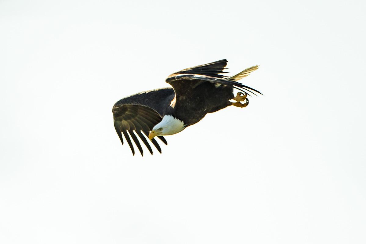 wildlife019