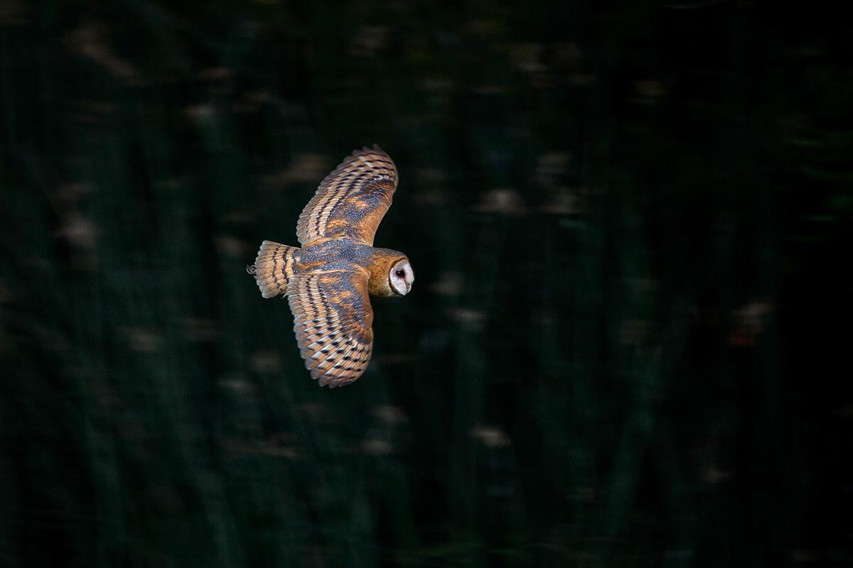 wildlife022