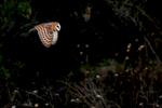 wildlife025