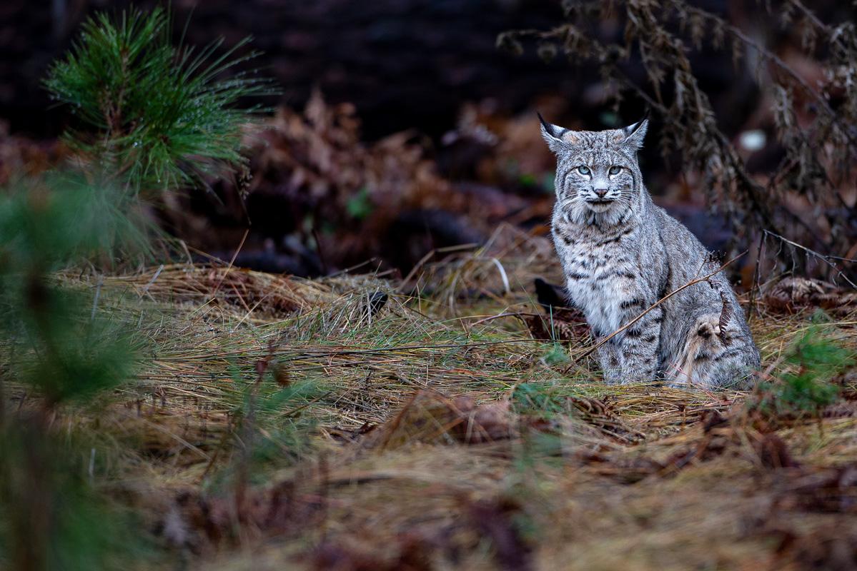 wildlife036
