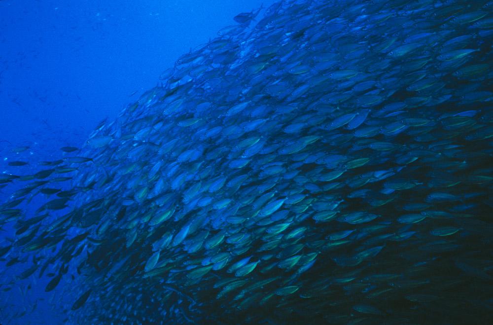 fish_swirl