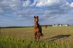 horse2-copy