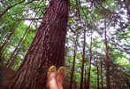 tree_gold_feet-copy-1