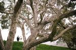 Heather & Sammy Wedding at , Monterey, California, USA on August 09, 2014.  Photo: Andrew Henderson