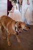 Lima-Wedding--356