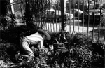 {quote}Community Garden Wars{quote} is a snapshot of a larger body of work which documents New York City's community gardens, and the struggle to keep them from being destroyed. New York City, 1997-2000.Photograph by ©Samantha Box1997-2000 ©Samantha Box