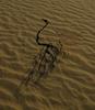 Branch on Dune