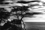 Lone Cypress Tree 17 Mile Drive Carmel CA
