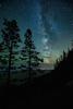 Milkyway-Trees_K9B8135