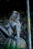 Monkey Kuala Lumpur