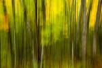 Tree-Swipe_K9B9133