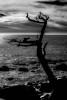 Tree in Ocean 17 Mile Drive Carmel CA