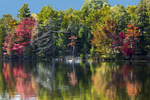 Trees-on-Pond-with-Reflections_K9B7892