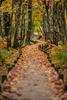 Walking-Path-through-Trees_K9B9393