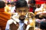Boy Giving Away Two Puppies