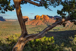 Juniper Tree Lookout View of Cathedral Rock Sedona
