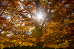 _K9B8854-Tree-with-Starburst