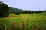 field-1-IMG_0799