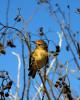 A Bird Galapagos