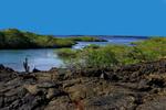 Marsh Galapagos