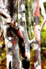 Tree Stalks Galapagos Islands