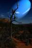 Tree Sedona Arizona