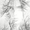double exposure  portrait of a womans face in the trees
