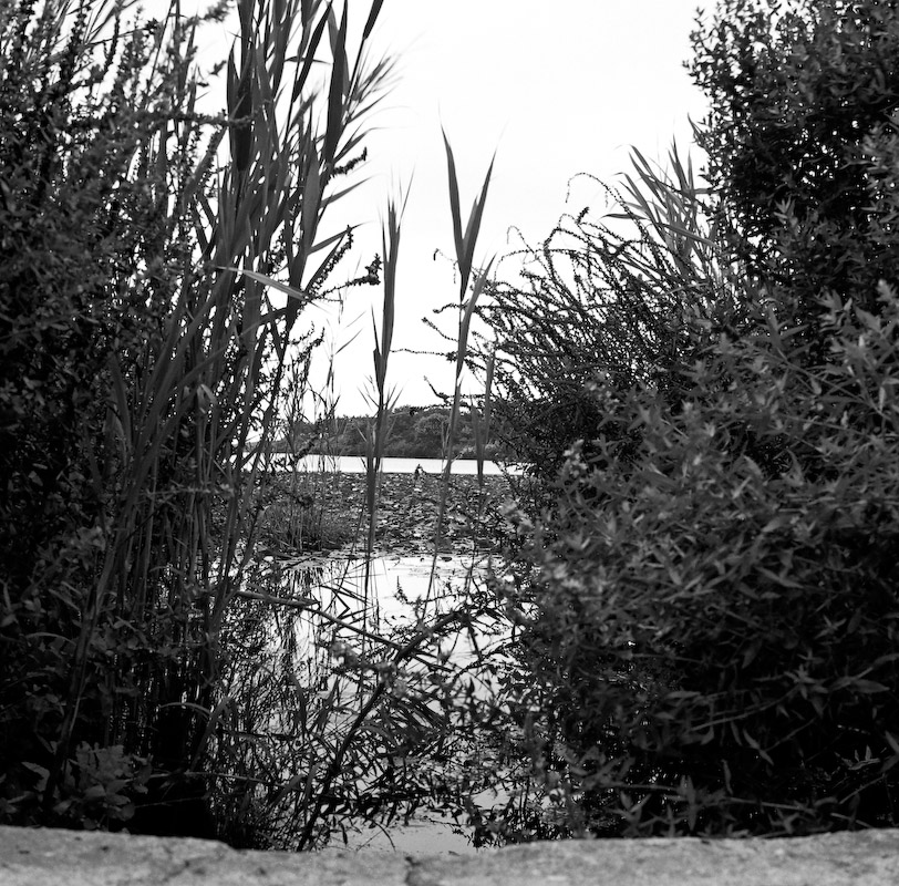 The Pond and then the Sea