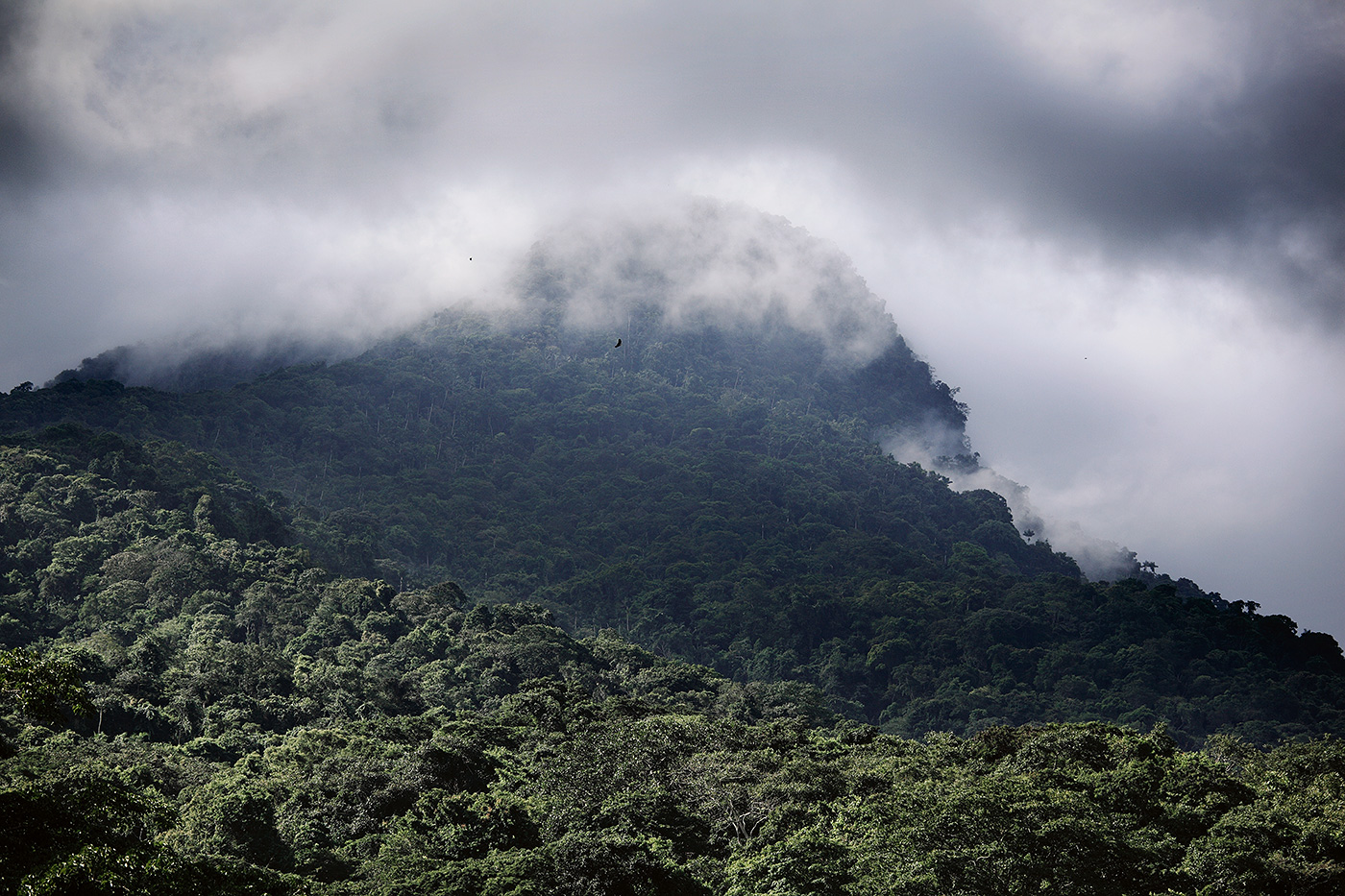 In the jungles beneath Mt. Sorte in northern Venezuela, pilgrims gather each year seeking a mystical union with the natural forces of this land and to honor their Queen, Maria Lionza.