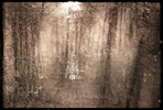 Image for Saerie Eilah.  One of the first photographs I made, many years ago.  To this day, I have no idea how it appeared on the negative, but it was early Spring.  There was an opening before me and the forest was filled with song birds.