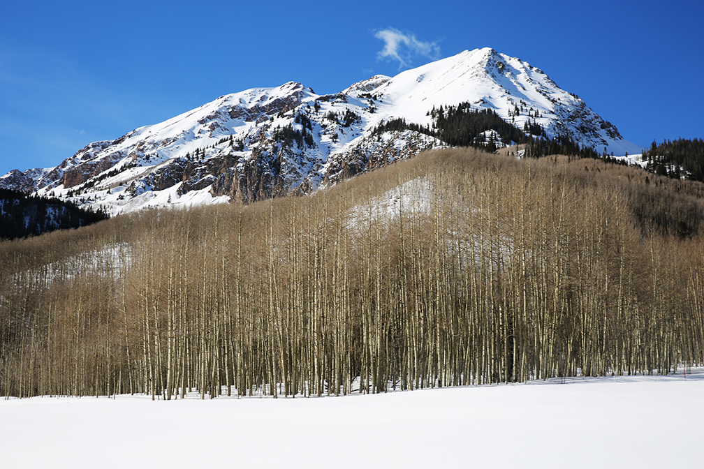 Aspen-trees-_-mnts