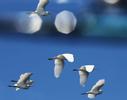 Birds-off-boat